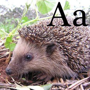"""""""A"""", de la Arici"""