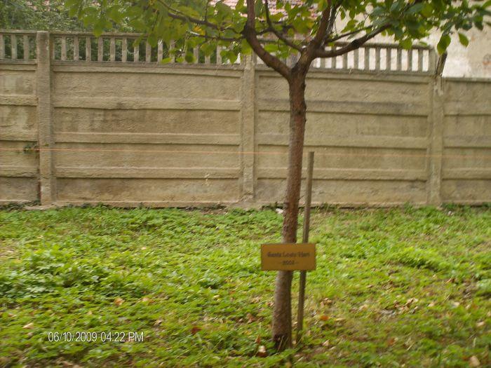 Omul şi pomul... Un obicei de împrumutat