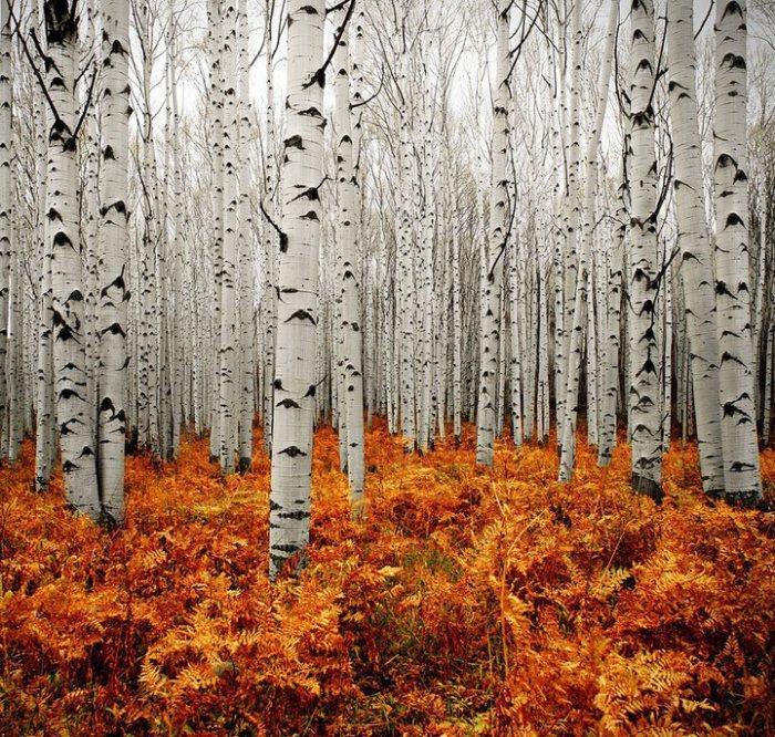 Foto: White forest in Aspen, Colorado (thegallerybypb.blogspot.ro)